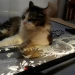 Кот лежит на гравированном витраже